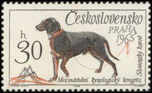 Slovensk-yacute--kopov-loveck-yacute--pes